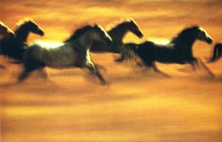 haas3_horses